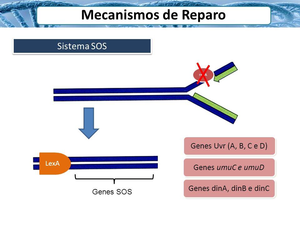 Mecanismos de Reparo Sistema SOS Genes Uvr (A, B, C e D)