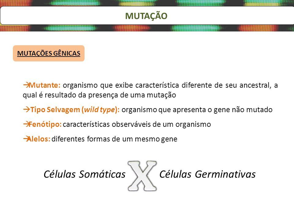 Células Somáticas Células Germinativas MUTAÇÃO
