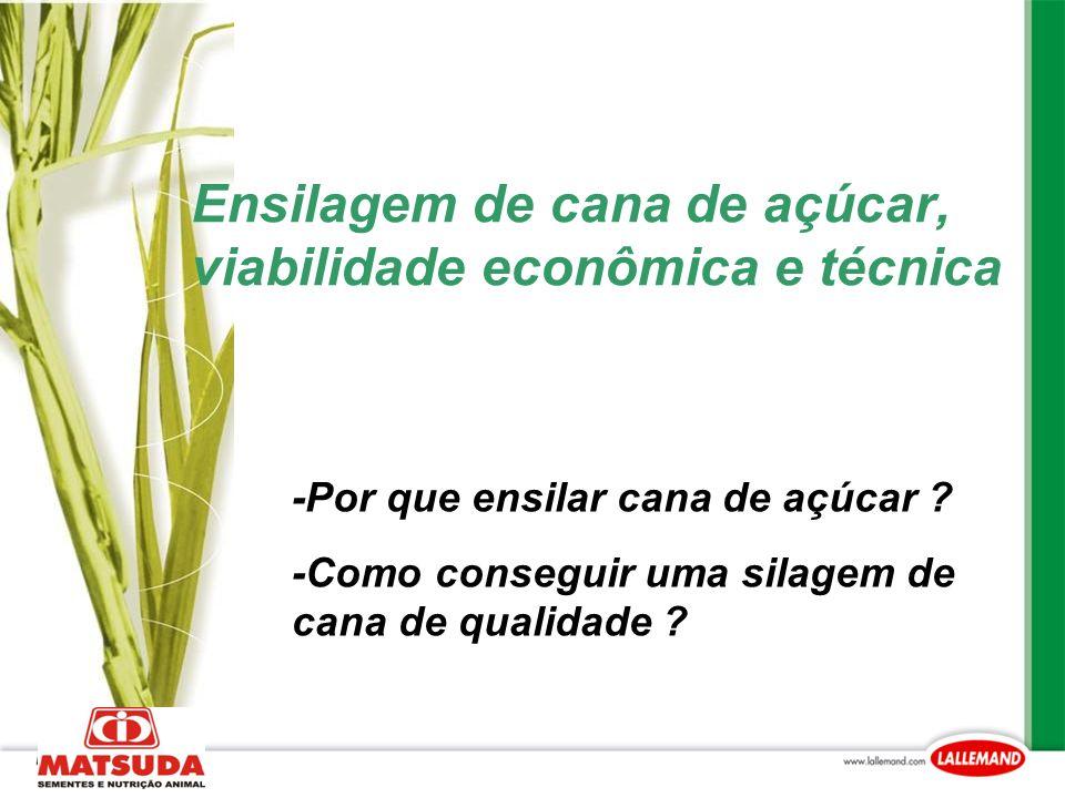 Ensilagem de cana de açúcar, viabilidade econômica e técnica