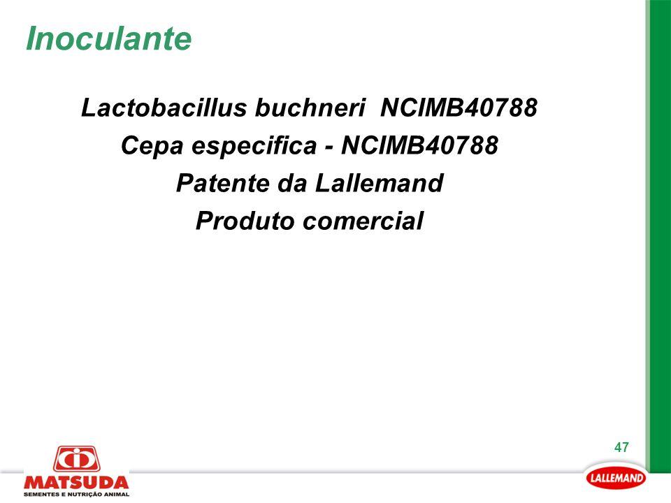 Lactobacillus buchneri NCIMB40788 Cepa especifica - NCIMB40788