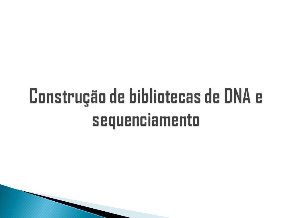 Construção de bibliotecas de DNA e sequenciamento