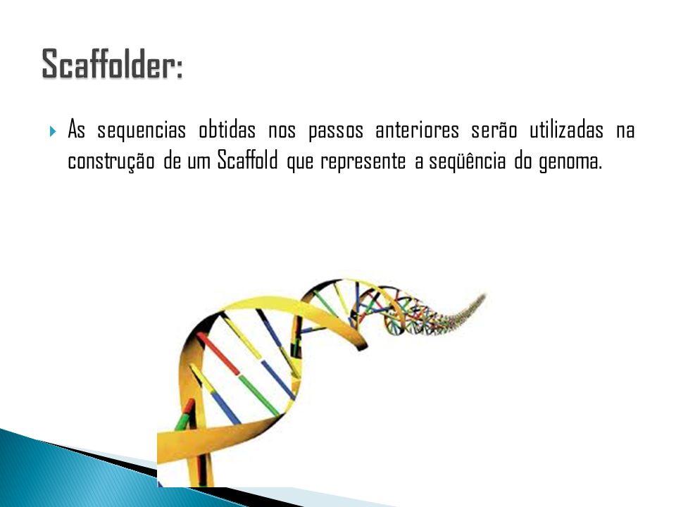 Scaffolder: As sequencias obtidas nos passos anteriores serão utilizadas na construção de um Scaffold que represente a seqüência do genoma.