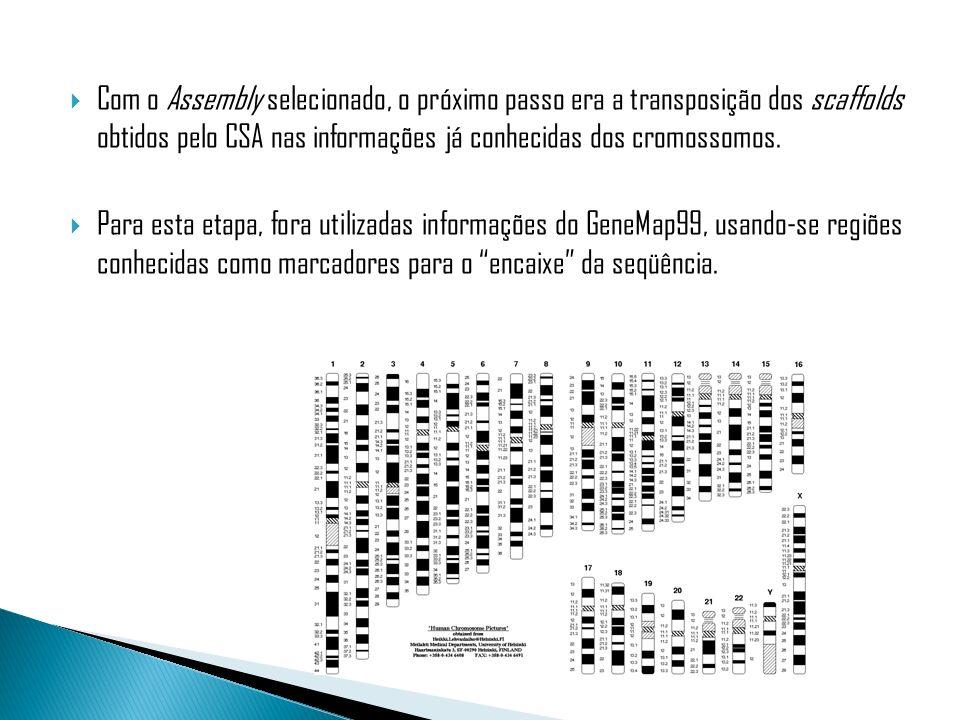 Com o Assembly selecionado, o próximo passo era a transposição dos scaffolds obtidos pelo CSA nas informações já conhecidas dos cromossomos.