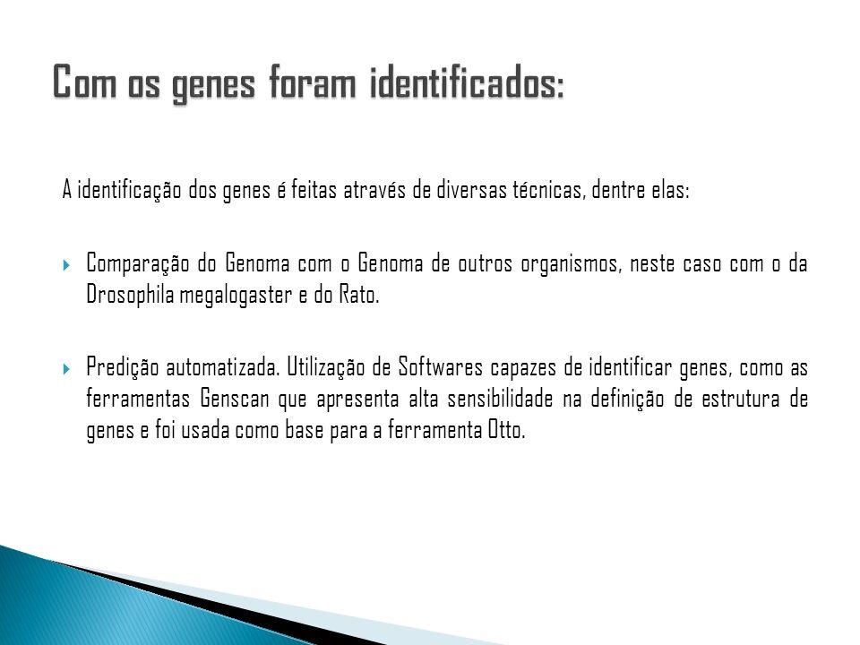 Com os genes foram identificados:
