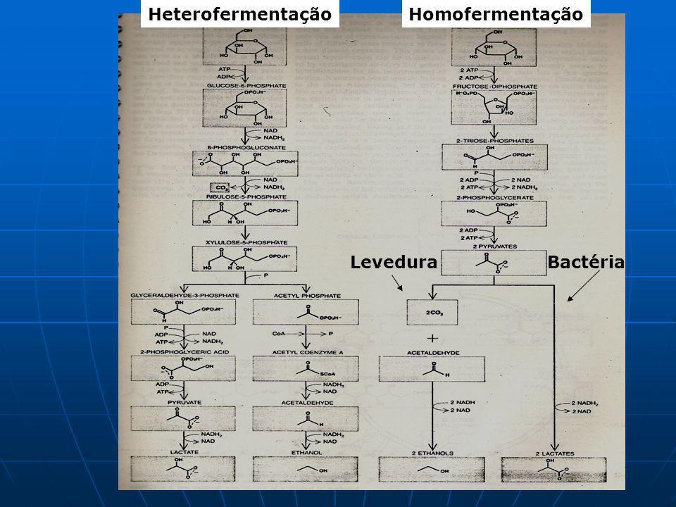 Heterofermentação Homofermentação Levedura Bactéria