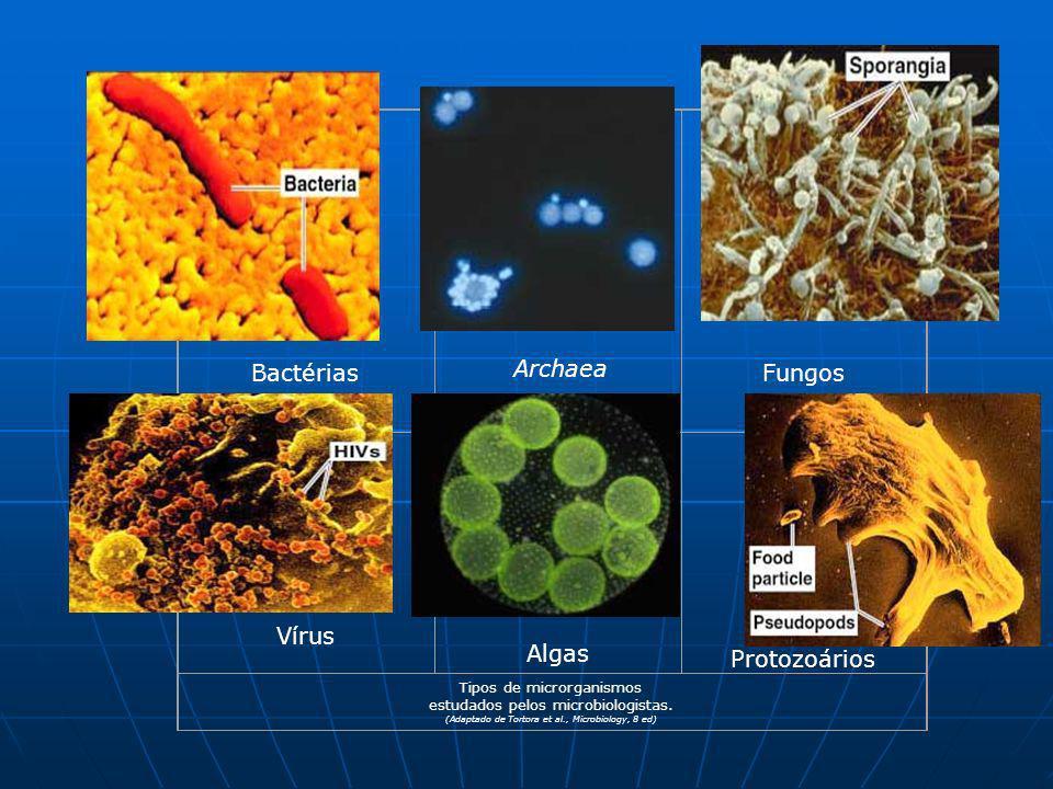 Fungos Bactérias Protozoários Vírus Algas Archaea