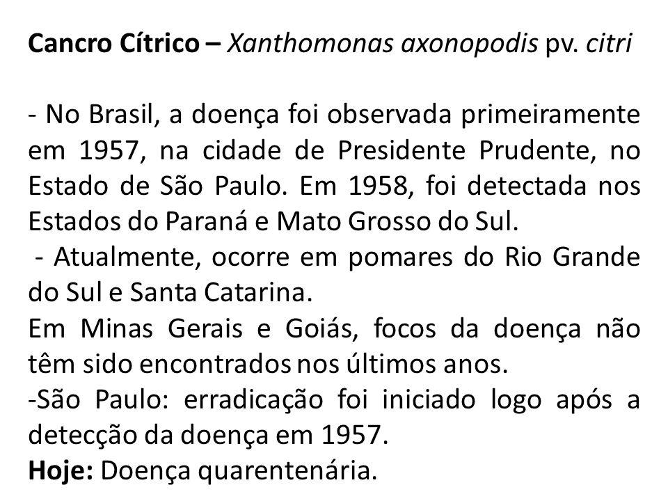 Cancro Cítrico – Xanthomonas axonopodis pv. citri