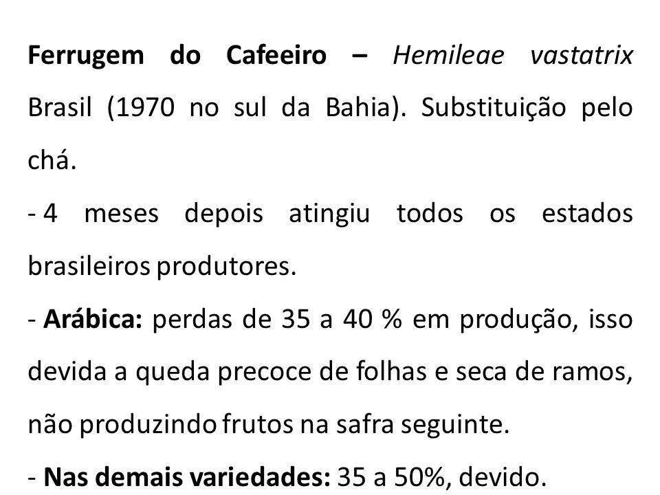 Ferrugem do Cafeeiro – Hemileae vastatrix Brasil (1970 no sul da Bahia). Substituição pelo chá.