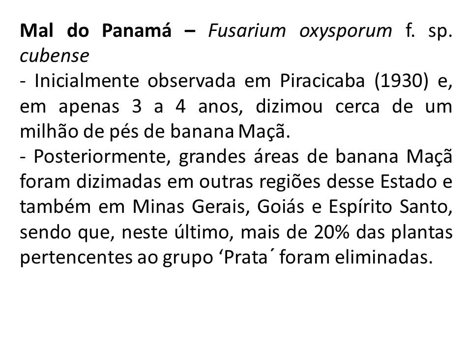 Mal do Panamá – Fusarium oxysporum f. sp. cubense