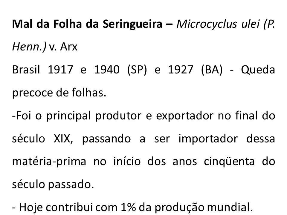 Mal da Folha da Seringueira – Microcyclus ulei (P. Henn.) v. Arx
