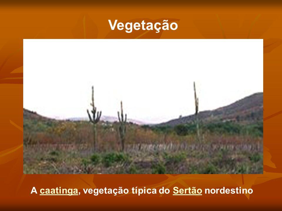 Vegetação A caatinga, vegetação típica do Sertão nordestino