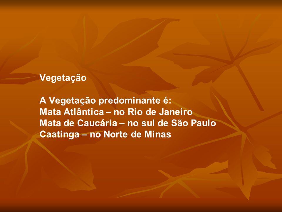 Vegetação A Vegetação predominante é: Mata Atlântica – no Rio de Janeiro. Mata de Caucária – no sul de São Paulo.