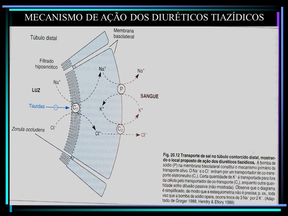 MECANISMO DE AÇÃO DOS DIURÉTICOS TIAZÍDICOS