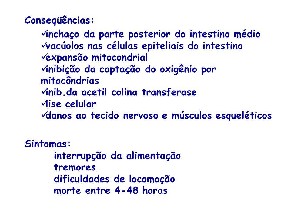 Conseqüências: inchaço da parte posterior do intestino médio. vacúolos nas células epiteliais do intestino.