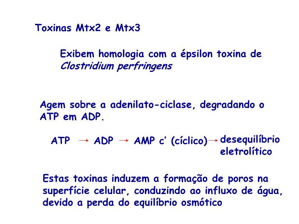 Toxinas Mtx2 e Mtx3 Exibem homologia com a épsilon toxina de. Clostridium perfringens. Agem sobre a adenilato-ciclase, degradando o.