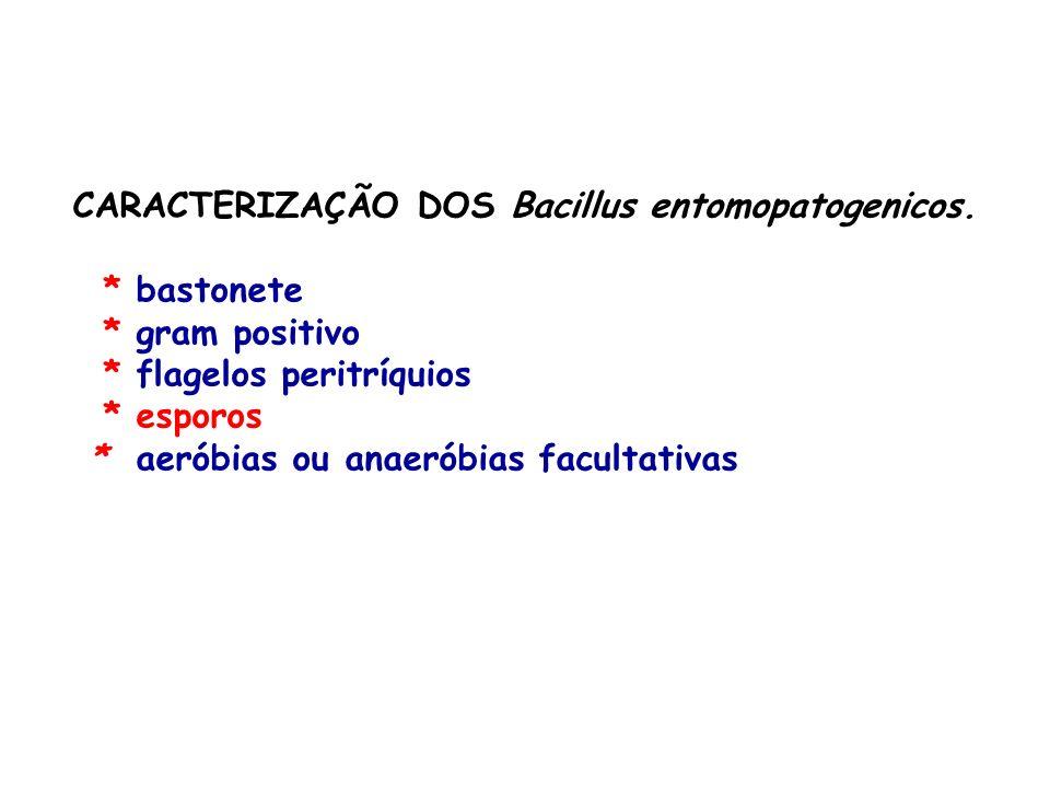 CARACTERIZAÇÃO DOS Bacillus entomopatogenicos.