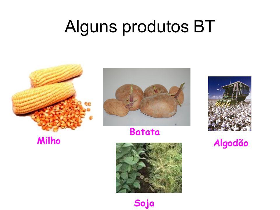 Alguns produtos BT Batata Milho Algodão Soja