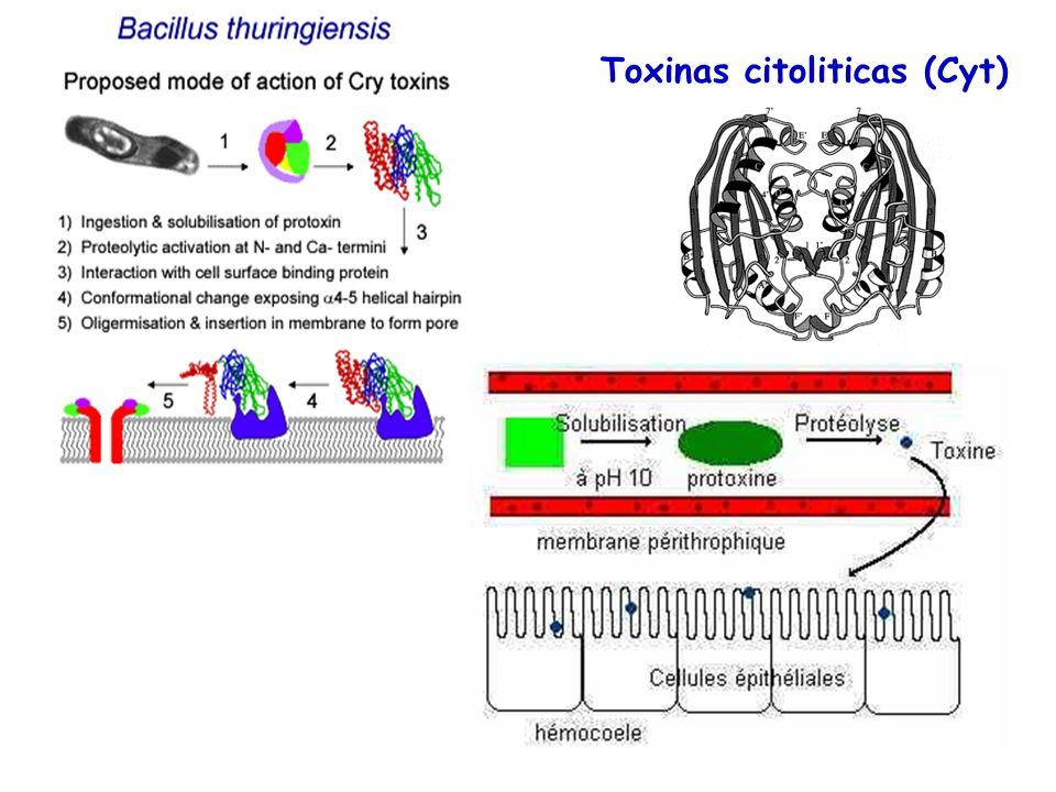 Toxinas citoliticas (Cyt)