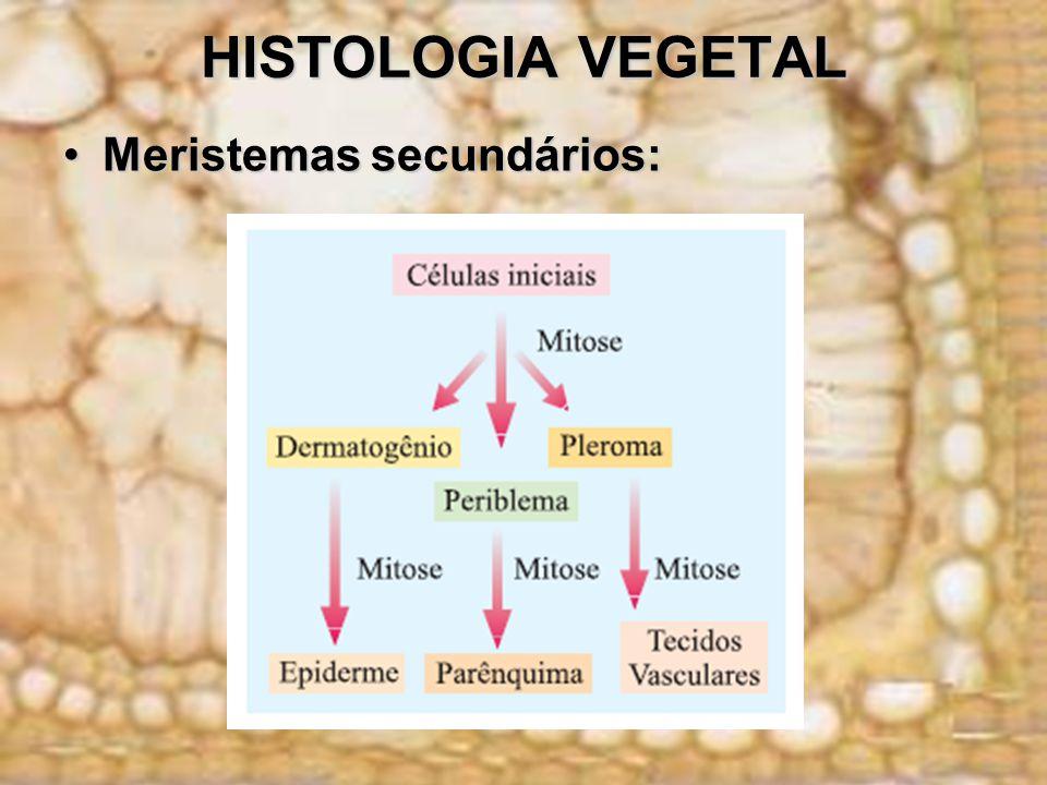 HISTOLOGIA VEGETAL Meristemas secundários: