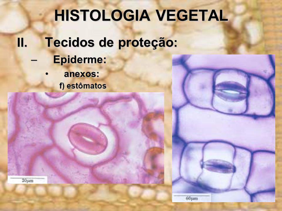 HISTOLOGIA VEGETAL II. Tecidos de proteção: Epiderme: anexos:
