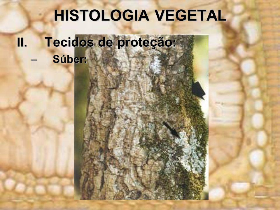 HISTOLOGIA VEGETAL II. Tecidos de proteção: Súber: