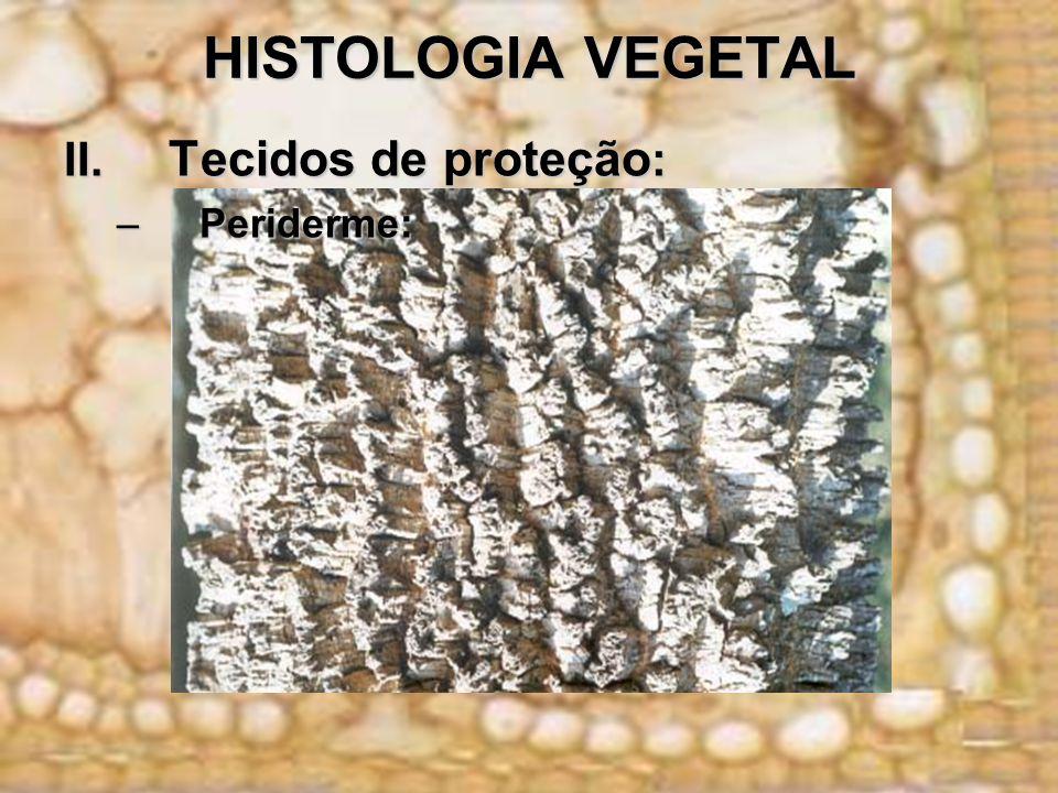 HISTOLOGIA VEGETAL II. Tecidos de proteção: Periderme: