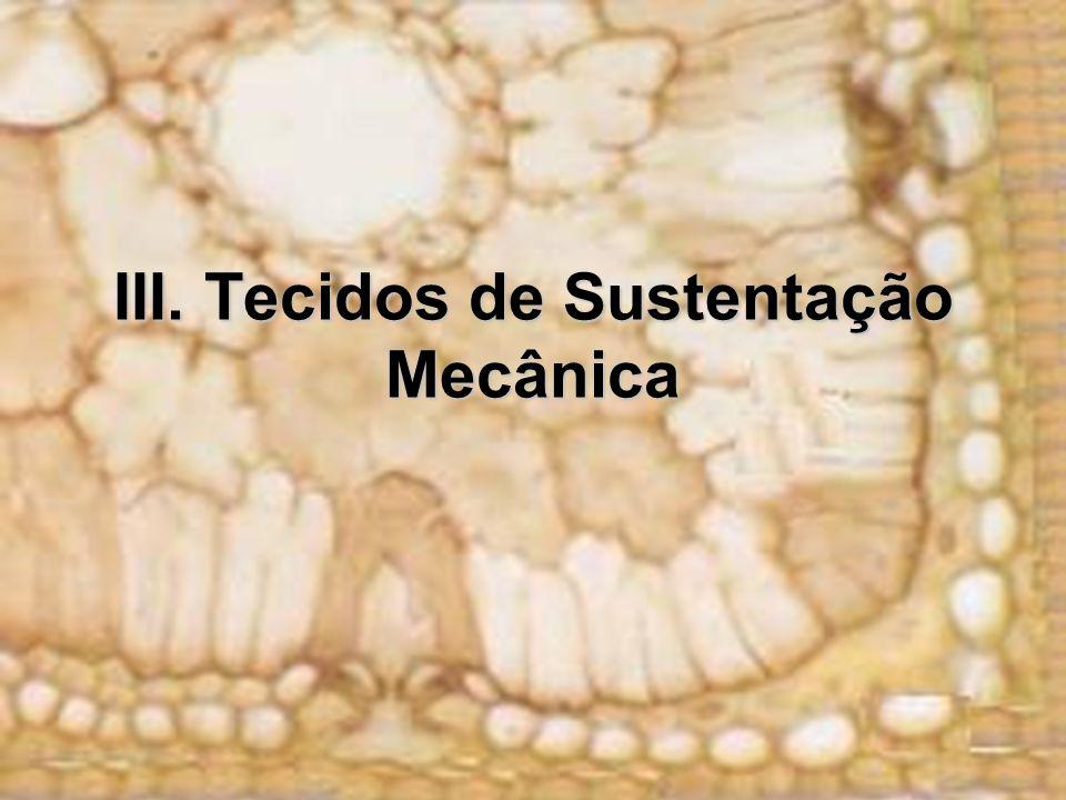 III. Tecidos de Sustentação Mecânica