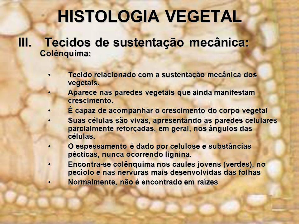 HISTOLOGIA VEGETAL Tecidos de sustentação mecânica: Colênquima: