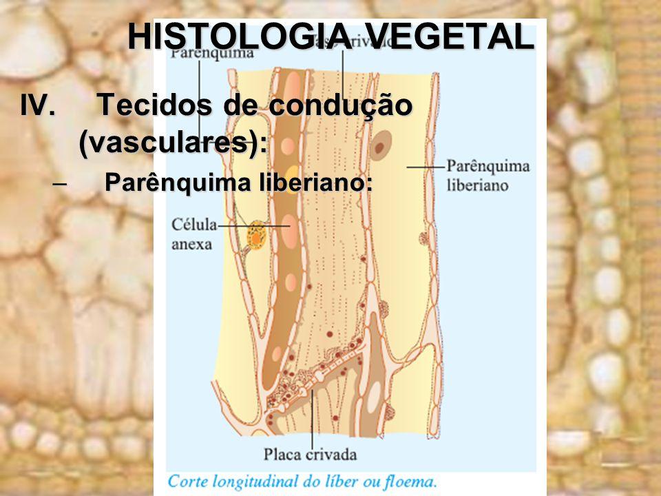 HISTOLOGIA VEGETAL IV. Tecidos de condução (vasculares):