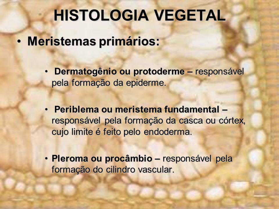 HISTOLOGIA VEGETAL Meristemas primários: