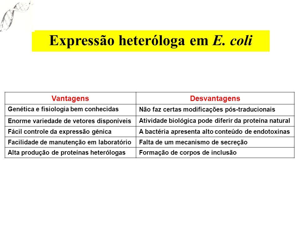 Expressão heteróloga em E. coli