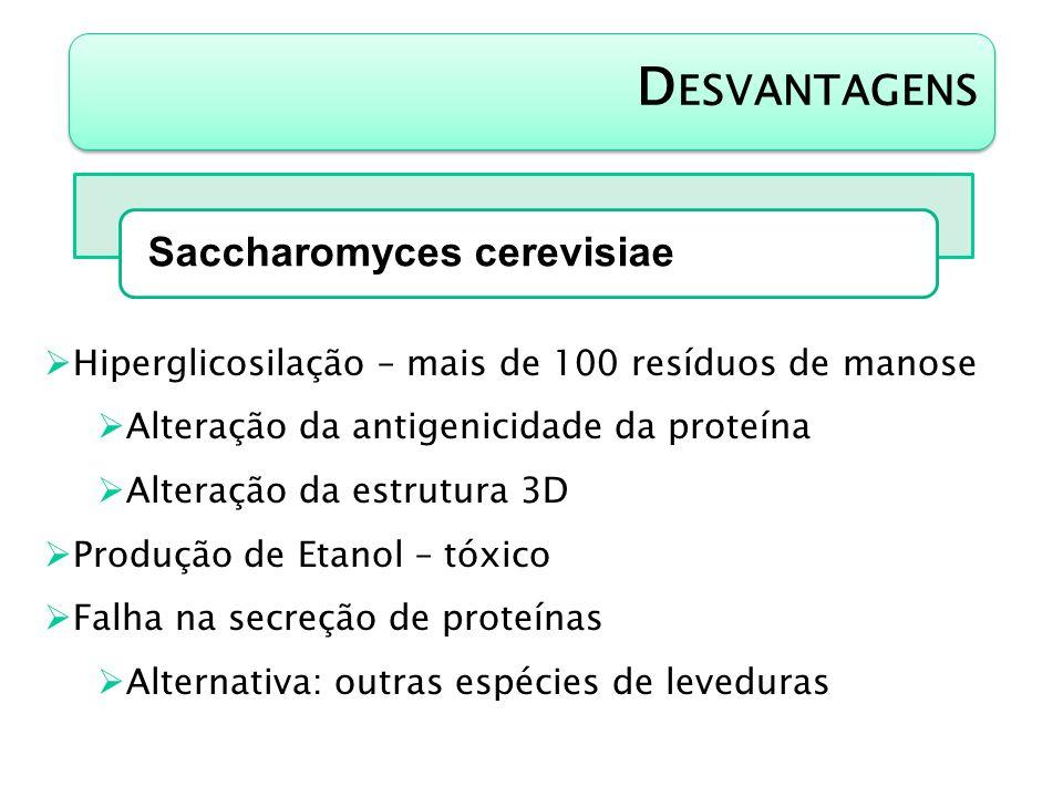 Desvantagens Saccharomyces cerevisiae