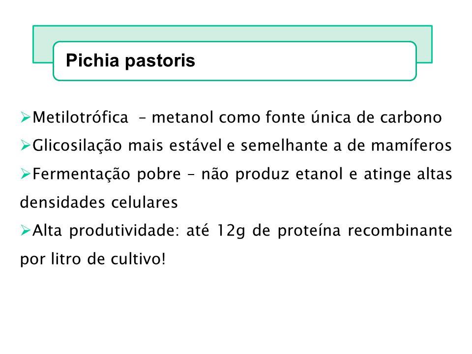 Pichia pastoris Metilotrófica – metanol como fonte única de carbono