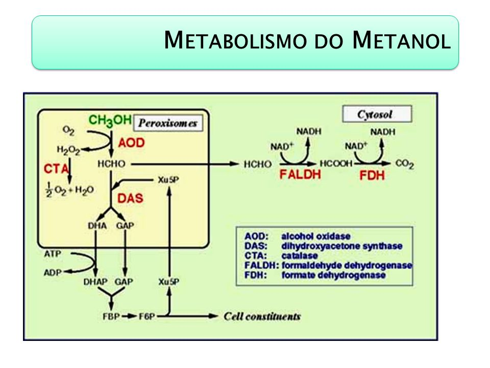 Metabolismo do Metanol