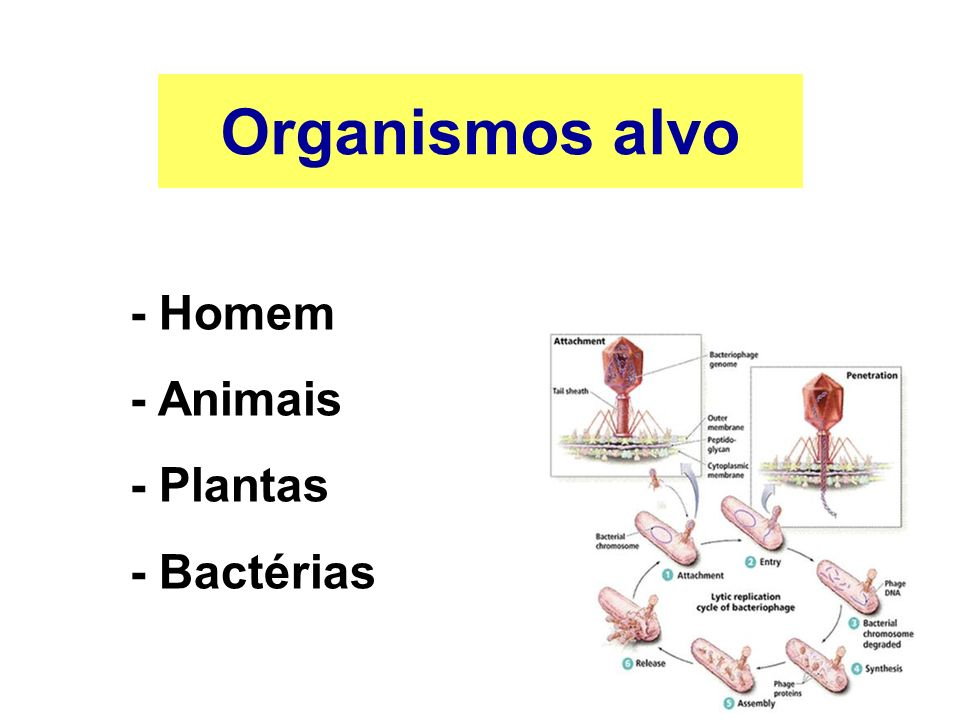 Organismos alvo - Homem - Animais - Plantas - Bactérias