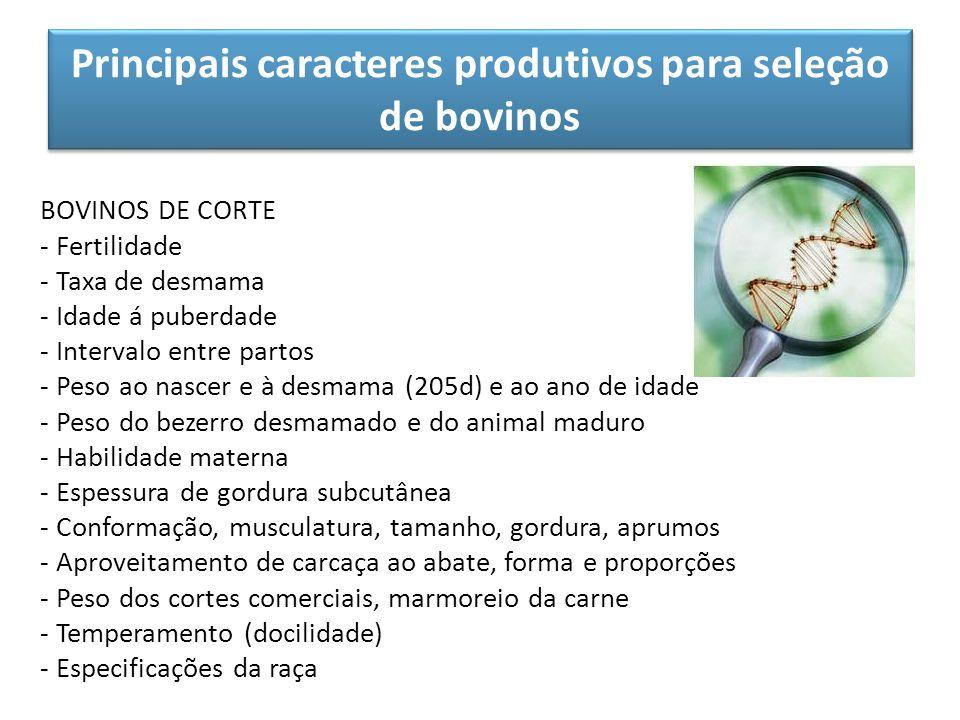 Principais caracteres produtivos para seleção de bovinos