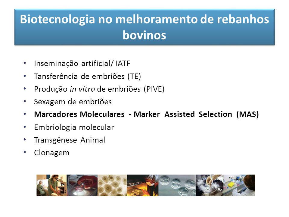 Biotecnologia no melhoramento de rebanhos bovinos