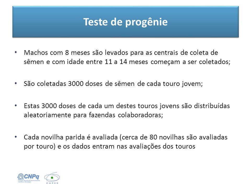 Teste de progênie Machos com 8 meses são levados para as centrais de coleta de sêmen e com idade entre 11 a 14 meses começam a ser coletados;