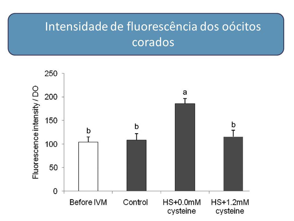 Intensidade de fluorescência dos oócitos corados