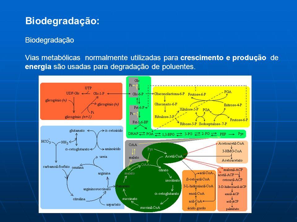 Biodegradação: Biodegradação