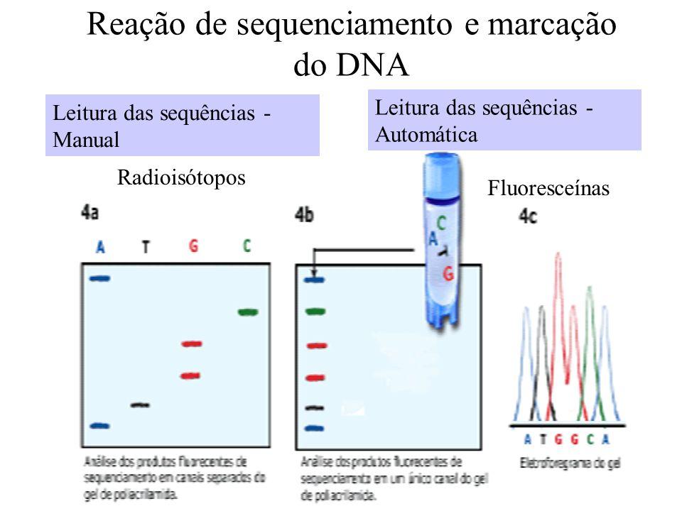 Reação de sequenciamento e marcação do DNA