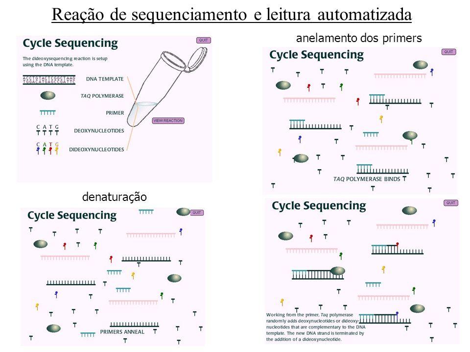Reação de sequenciamento e leitura automatizada