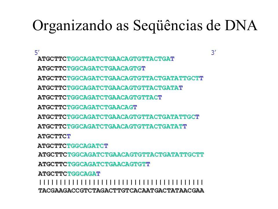 Organizando as Seqüências de DNA