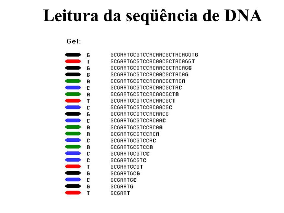 Leitura da seqüência de DNA