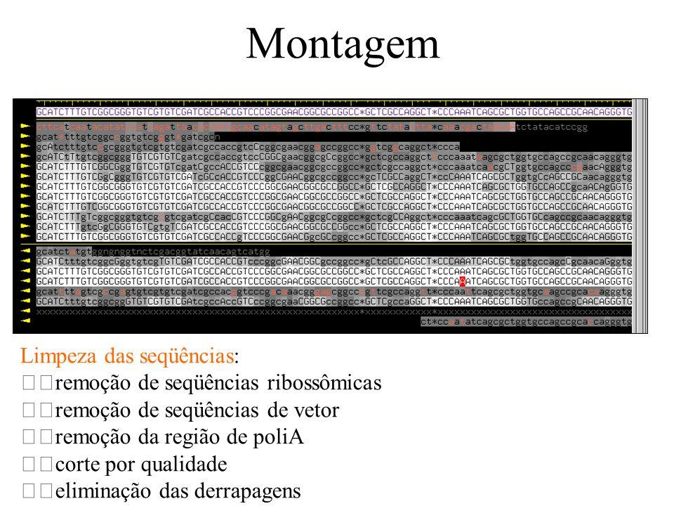 Montagem Limpeza das seqüências: remoção de seqüências ribossômicas