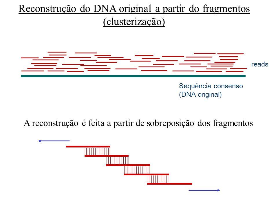 Reconstrução do DNA original a partir do fragmentos (clusterização)