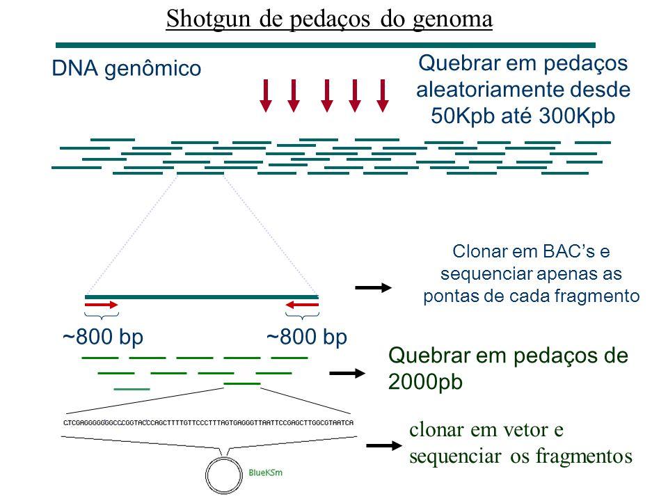 Shotgun de pedaços do genoma