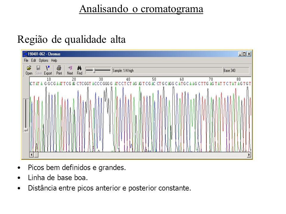 Analisando o cromatograma