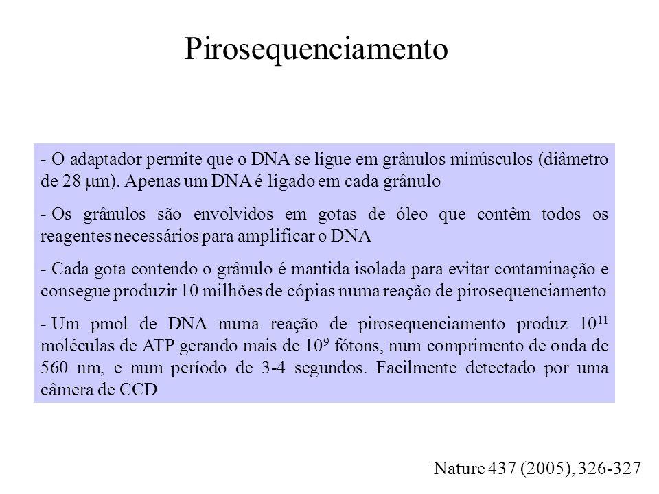 Pirosequenciamento O adaptador permite que o DNA se ligue em grânulos minúsculos (diâmetro de 28 mm). Apenas um DNA é ligado em cada grânulo.