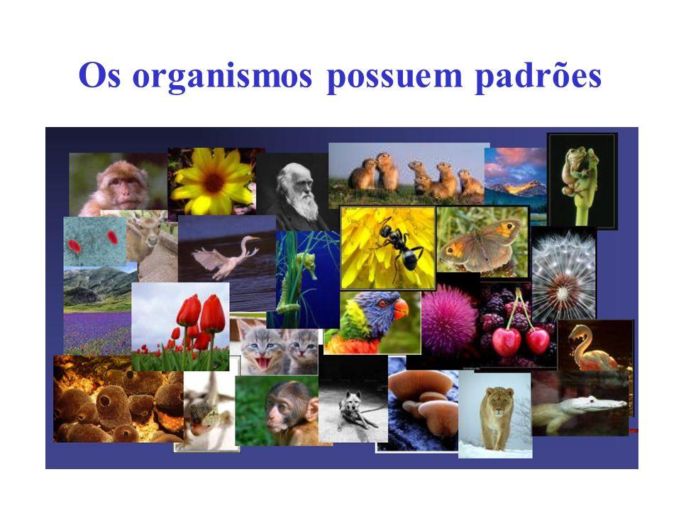 Os organismos possuem padrões